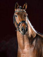 Colando von Alfen Portrait ©Reckimedia